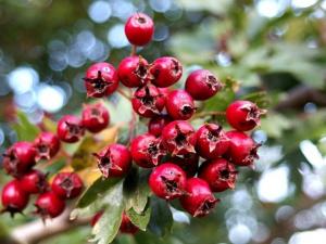 Wilde Heilpflanzen  Nahrungsergänzung aus heimischen Wildpflanzen