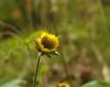 Wilde Heilpflanzen - Heilpflanzen im Frühling, Thema  Reinigung und Ausleitung