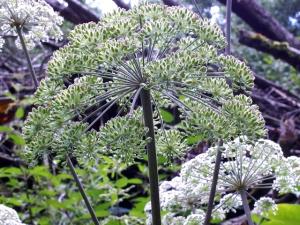 Räucherwerk aus heimischen Kräutern, Harzen, Samen, Wurzeln